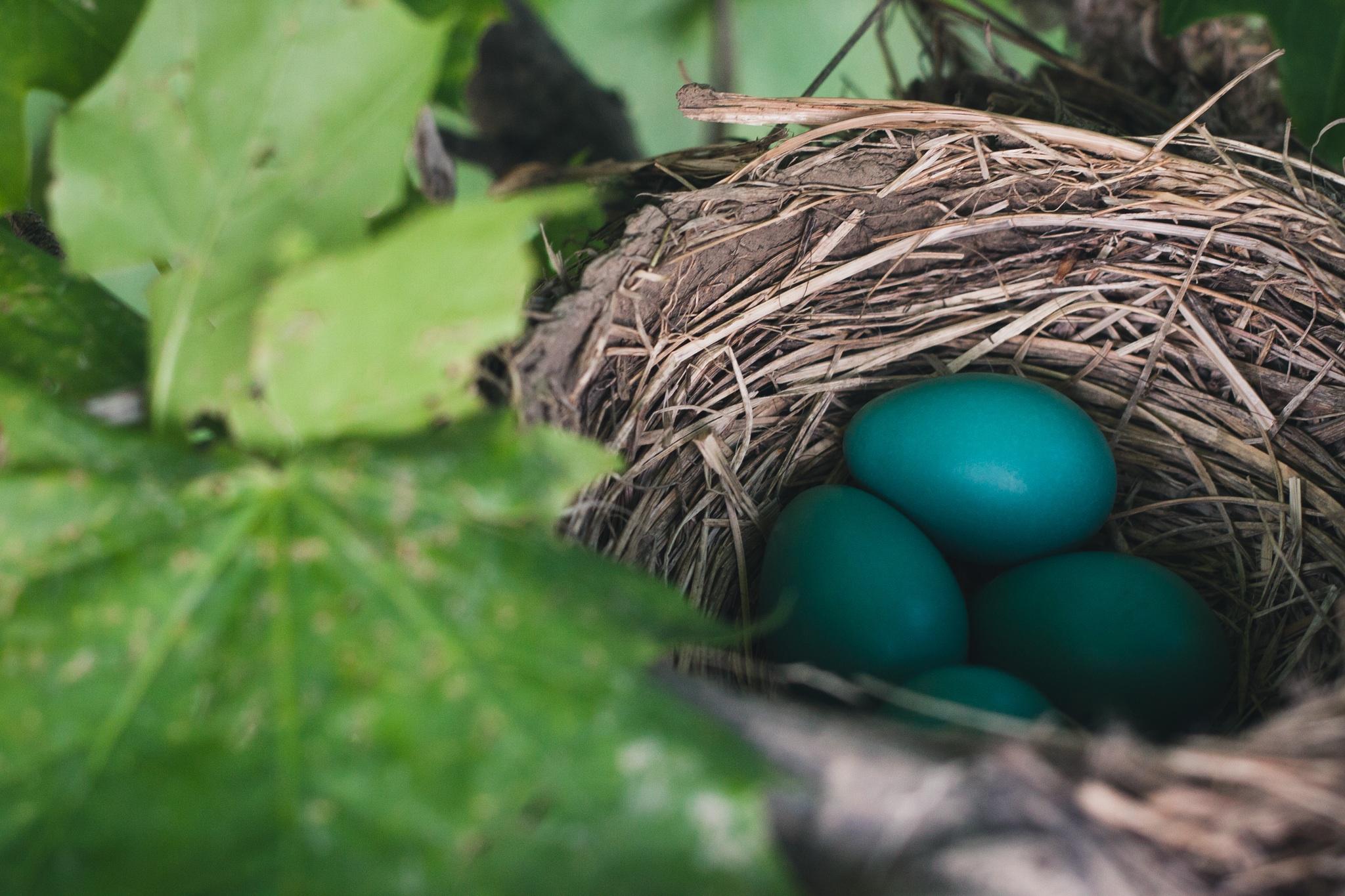 eggs-by-ian-baldwin